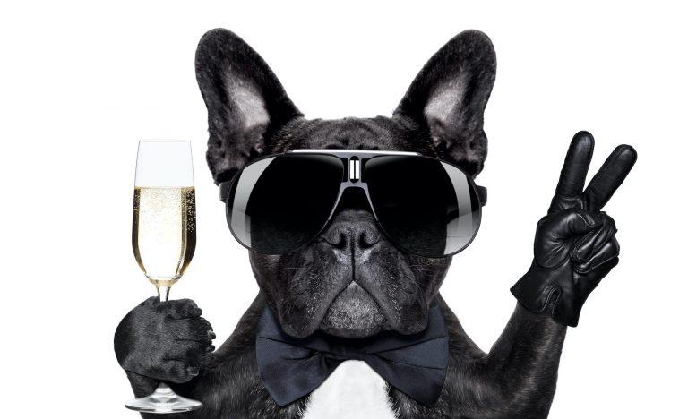 a dog enjoying a glass of champagne