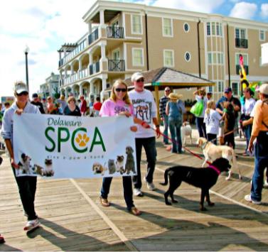 SPCA Bark on The boards Rehoboth Beach Delaware
