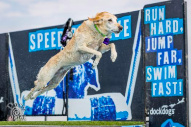 Dog Jumping at Delaware SPCA bark on the boards event in rehoboth beach